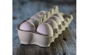 Free range eggs - Brad