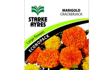 Marigold Crackerjack