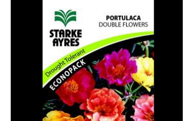 Portlaca Double Flowers