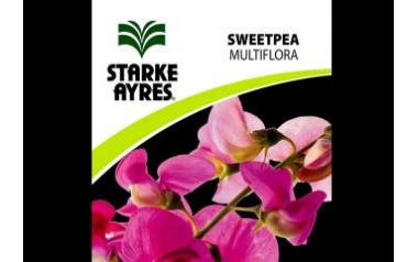 Sweetpea Multiflora