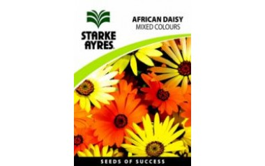 African Daisy Mix