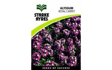 Alyssum - Royal Carpet