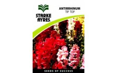 Antirrhinum - Tip Top