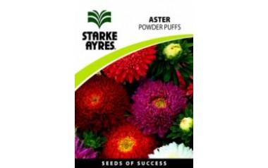 Aster - Powder Puffs