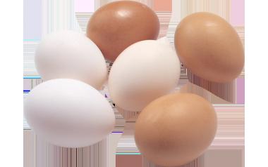Free Range Eggs 6's